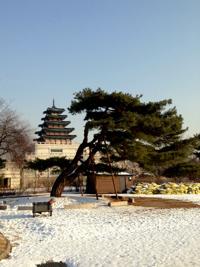 Tree and Palace. For more photos from Gyeongbokgung, check out the gallery at the end of this post
