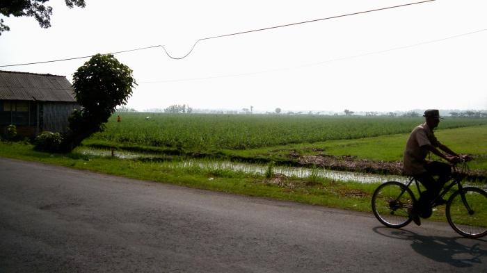 Rice paddies all around