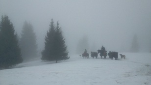 When it was all over, it was time to follow the horses into the fog and back into civilization