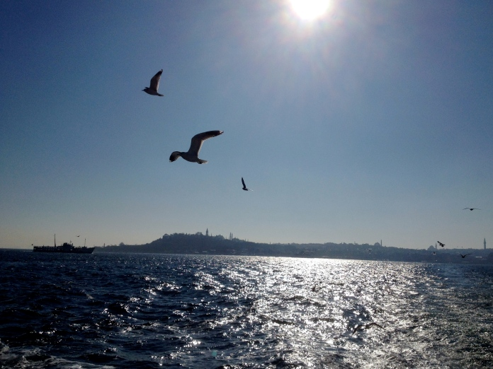 Birds chasing the ferry