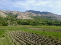 The farms of Zong. Not so different than Langar, probably because when you leave one town you are in the other.