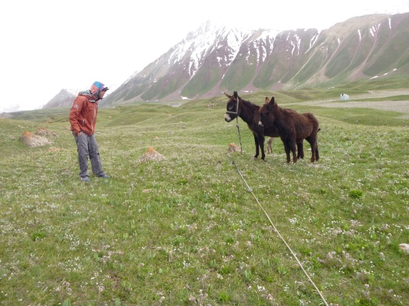 Donkey Stand-off in the Kyrgyz Pamir Foothills. Photo: Bjorn