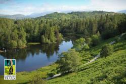 View of Tarn Hows, my favorite part of the course and where I did my best running.