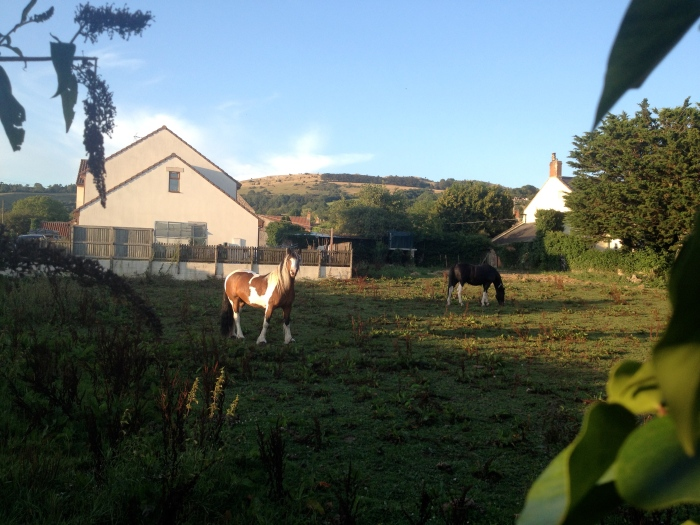 Horses in Draycott